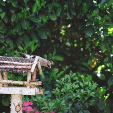 Vogelhuisje in de tuin